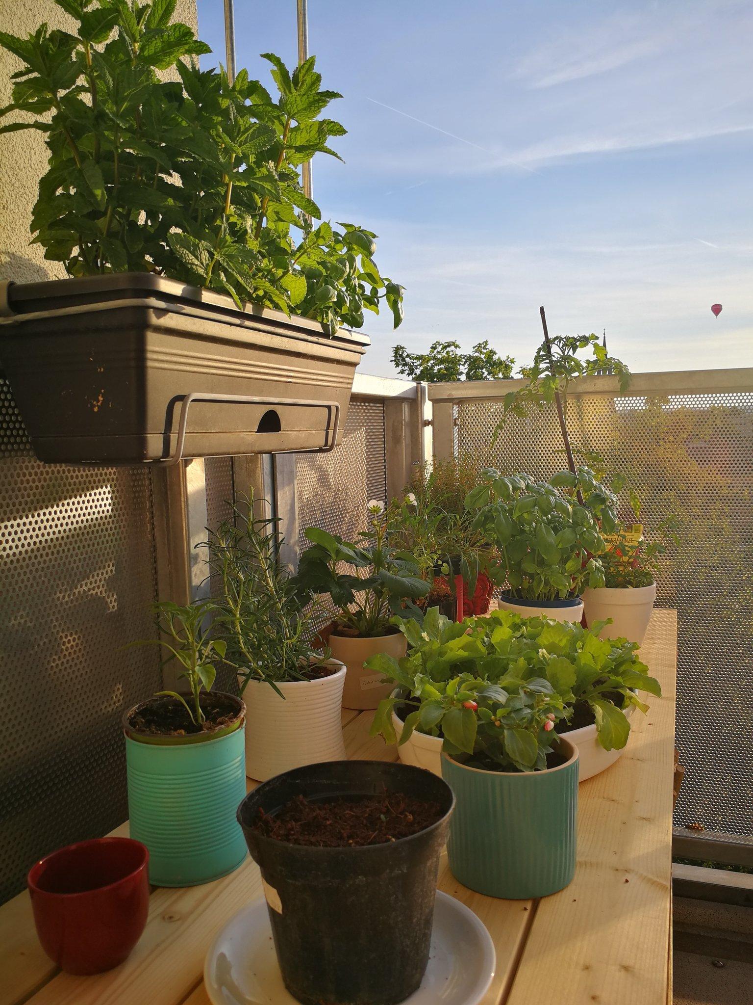 urban_garden__Krameike
